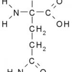 Charakterystyka wybranych odzywek / suplementow: Glutamina