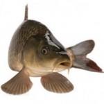 Fish Day na PoTreningu.pl – 4 artykuły