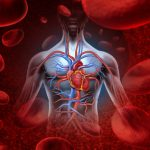 Clenbuterol powoduje przerost serca?