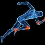 Agryna – szansa na regenerację stawów?